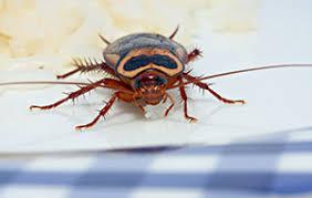 Pest Control Ballarat
