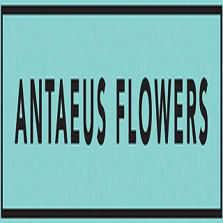 Antaeus Flowers