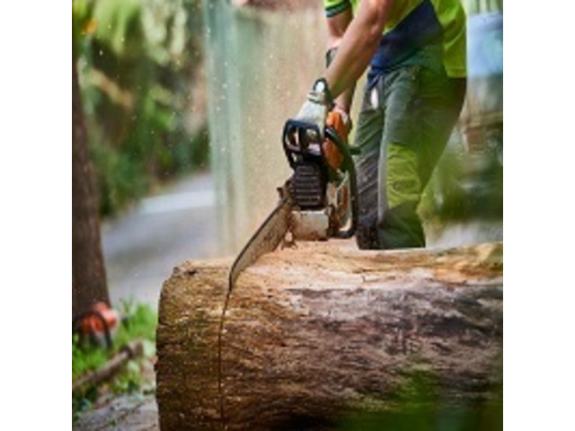 Reliable Stump and Root Removal in Oakleigh - Malvern Tree Stump Removal - 1