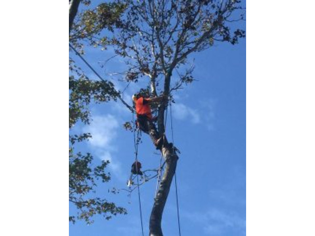 Tree cutting services Marrickville - 1