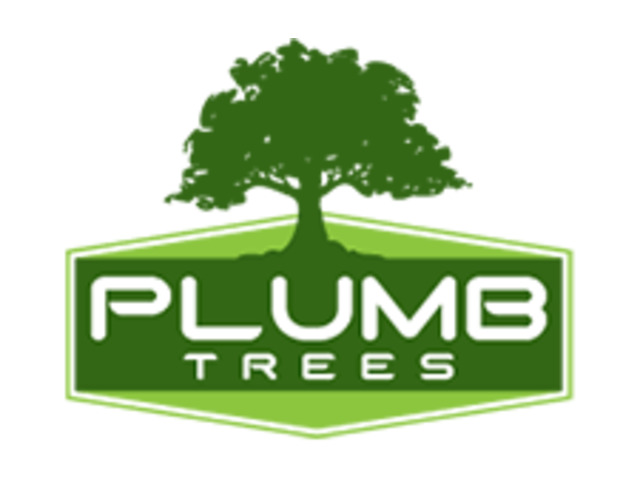 Tree cutting services Marrickville - 2