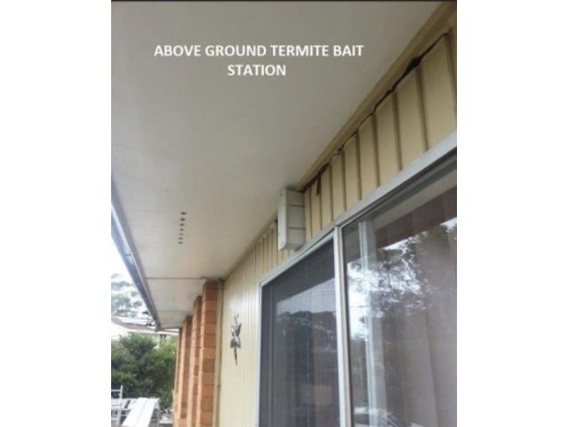Are You In search of Pest Control Services Providers in your Property in Collaroy? - 2