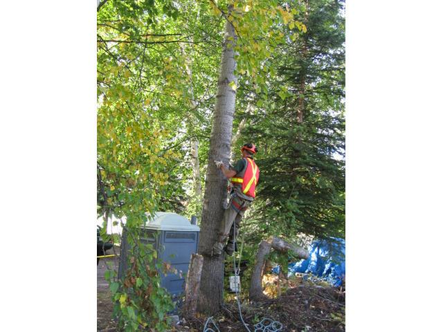 Tree Removal Sydney CBD - 1