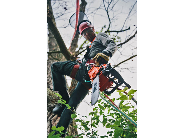 Tree Removal Sydney CBD - 2