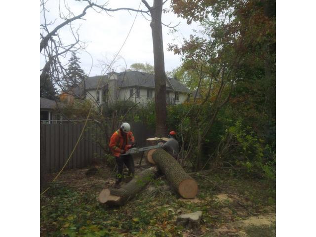Tree Removal Sydney CBD - 3