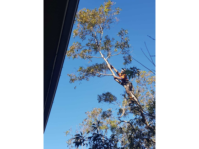 Professional Tree Removal Services - 1