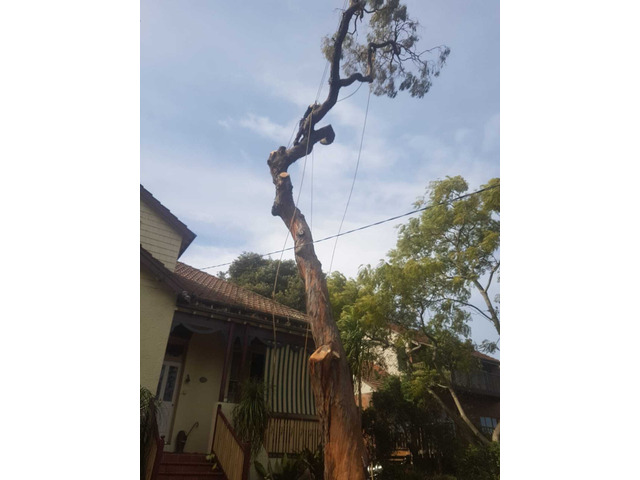Professional Tree Removal Services - 2