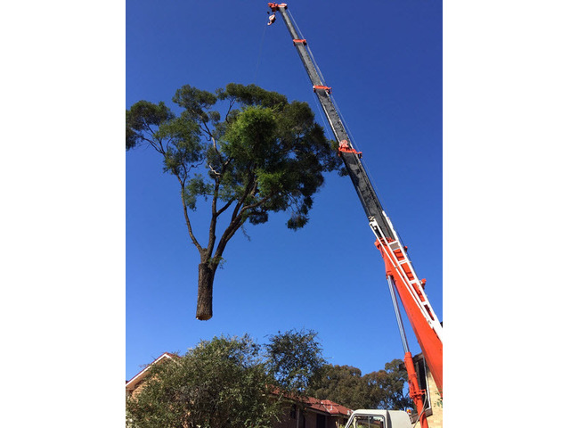 Tree Removal Sutherland Shire - 1