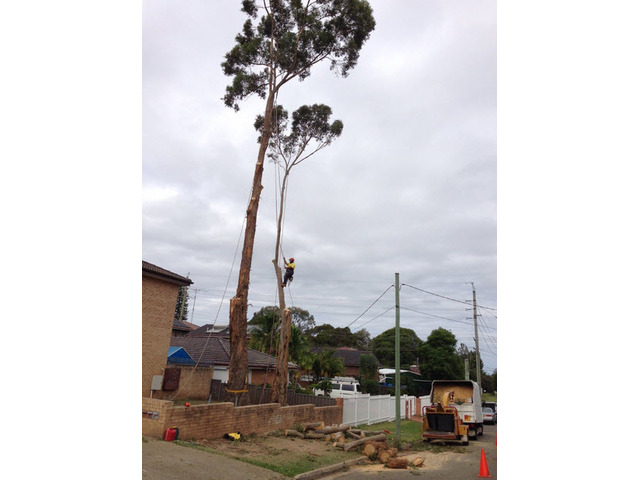 Tree Removal Sutherland Shire - 2