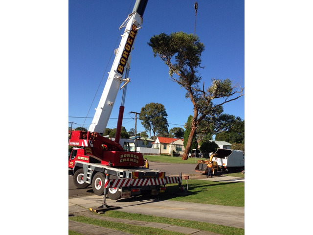 Tree Removal Sutherland Shire - 3