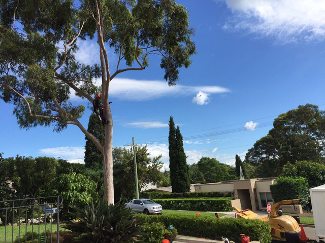 Tree Removal Sutherland Shire - 4