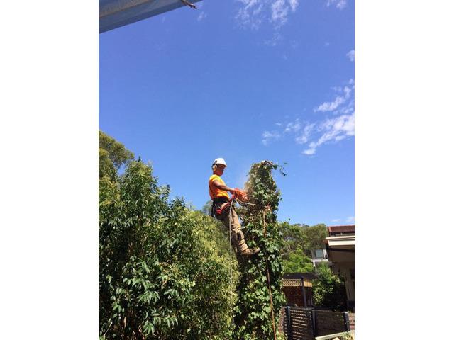 Emergency Tree Removal Sydney - 1