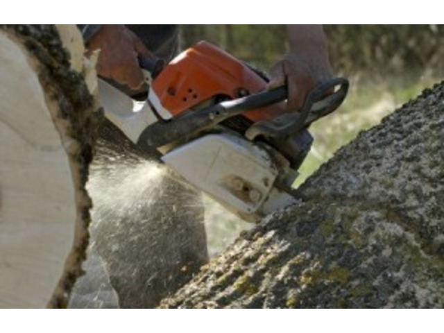 Tree Lopping Services Eastern Suburbs - 2