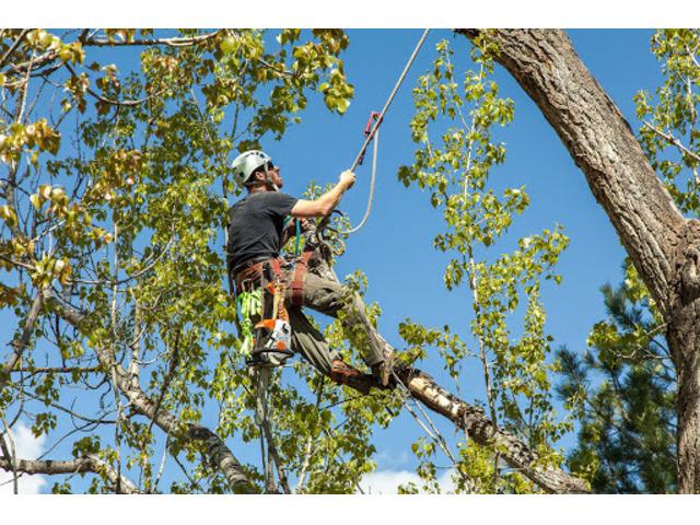 Tree Removal service - 2
