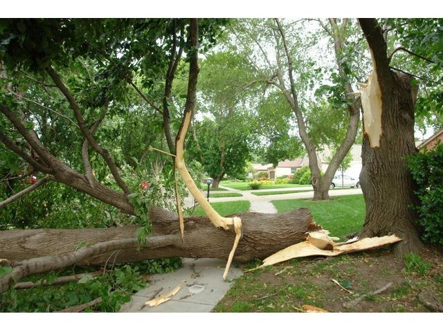Tree Removal service - 3