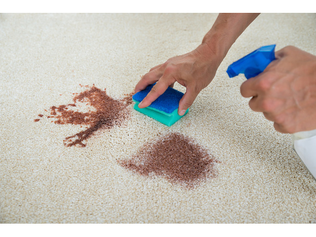 Drymaster Carpet Cleaning Canberra - 3