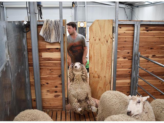 ProWay Shearing Shed Designs - 1