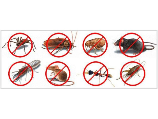 On Time Pest Control Werribee - 1