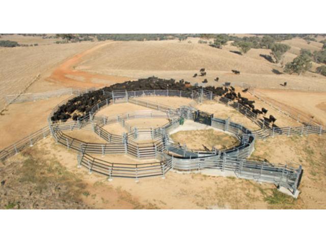 Cattle Handling Equipment - 1