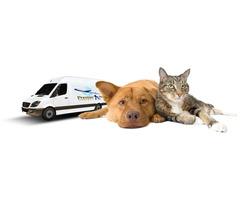 Pet Transport Melbourne