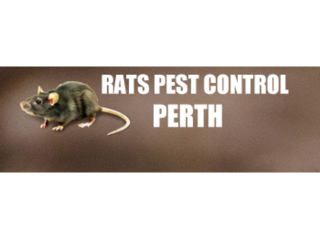 Be Worry-Free of Rats with Pest Control Perth - 2