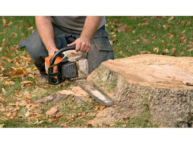Quality Tree Stump and Root Removal Specialists in Brighton - Stump Removal Malvern - 1