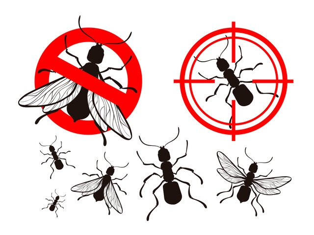 Pest Control Cranbourne - 1