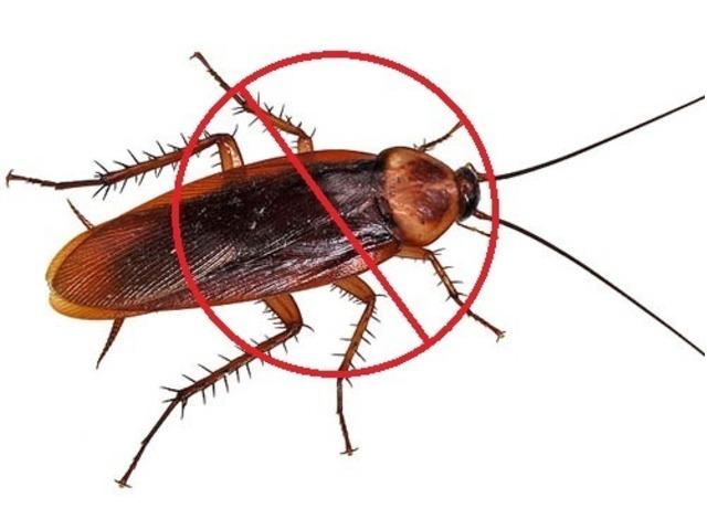 Pest Control Cranbourne - 2