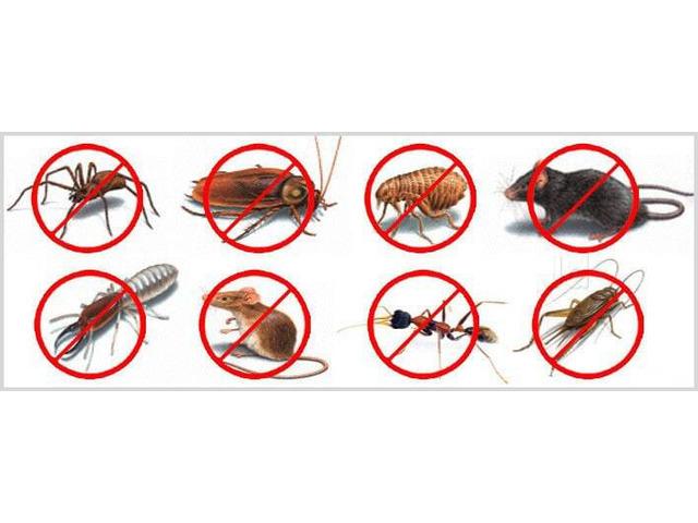 Pest Control Cranbourne - 3