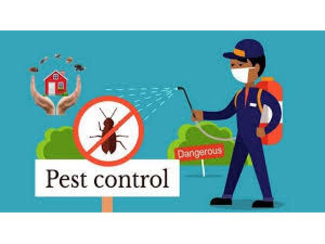 Best Termite Control Penrith - 1