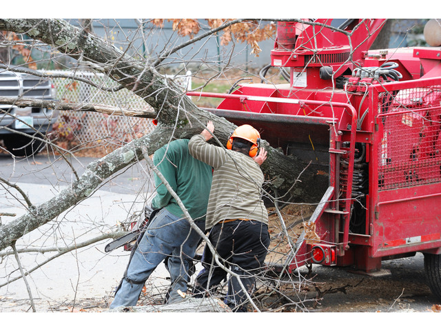 Hire Tree Removal and Pruning Across Perth - 2