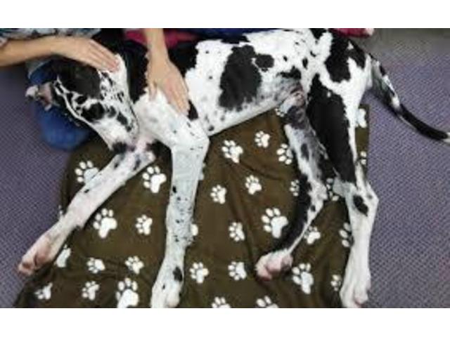 Dog Massage - Ph. 61 8645 49318 - 1