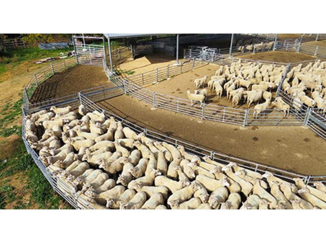 Custom Built Sheep Yards from ProWay - 1