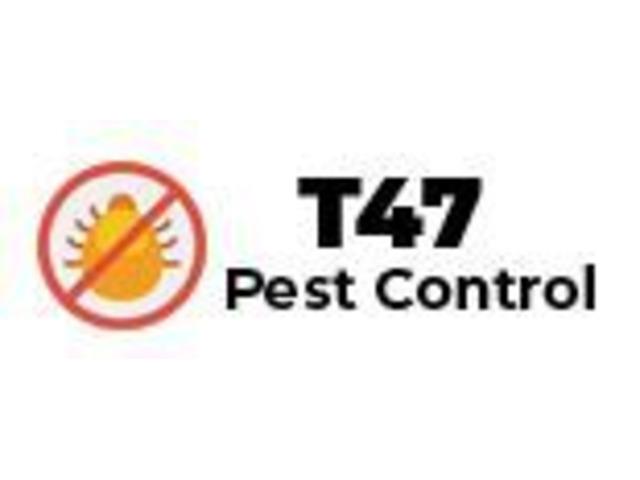 Flea pest control - 1