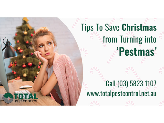 5 Pest Control Shepparton Tips To Save Christmas from Turning into 'Pestmas' - 1