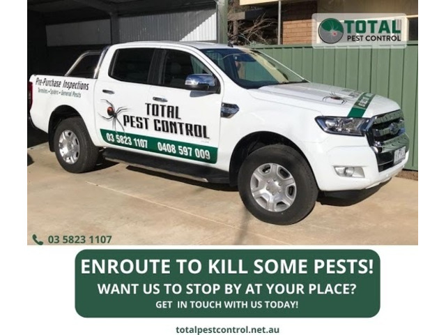 5 Pest Control Shepparton Tips To Save Christmas from Turning into 'Pestmas' - 2