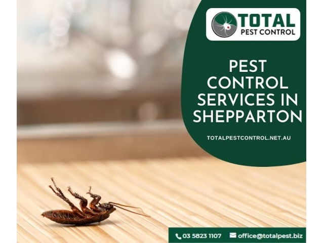 5 Pest Control Shepparton Tips To Save Christmas from Turning into 'Pestmas' - 5