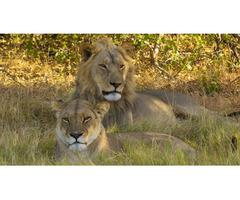 African Photography Safari | 0408 446 289