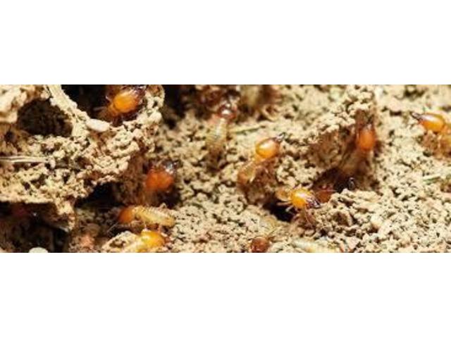 Pest Control Nollamara - 1