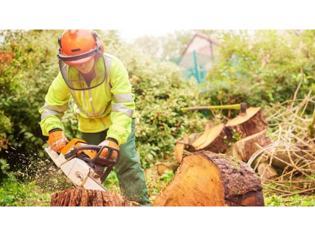 Looking for cheap stump and root removal in Mulgrave? - 1