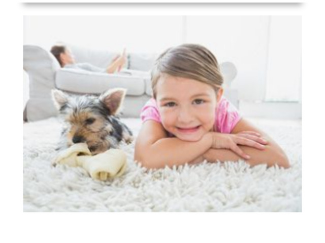 Hot Water Extraction Carpet Cleaning    1300136365 - 1