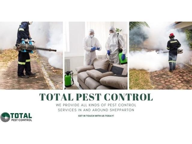 Bid Goodbye to Termites with Expert Termite Control Bendigo - 4