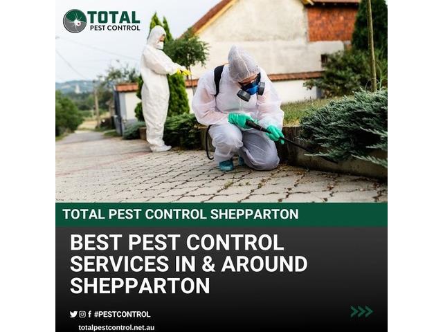 Bid Goodbye to Termites with Expert Termite Control Bendigo - 6
