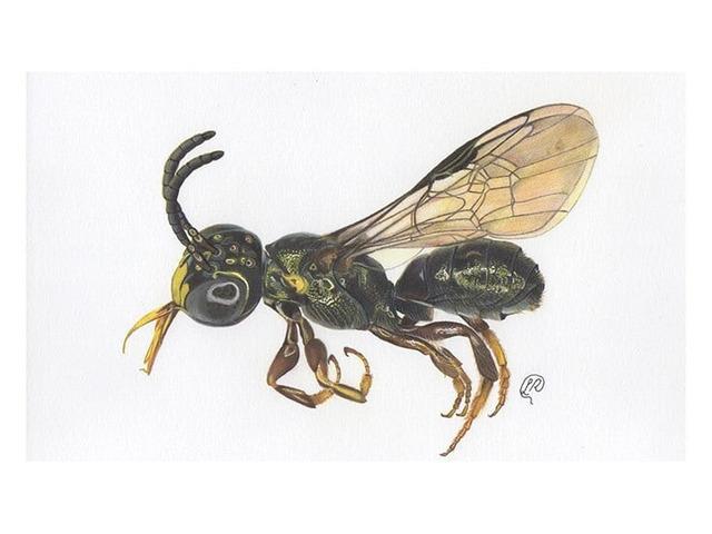 Professional Pest Control Melbourne - 2