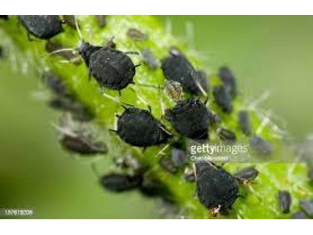 Professional Pest Control Melbourne - 4