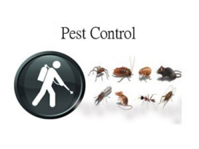 Pest Control Highfields - 1