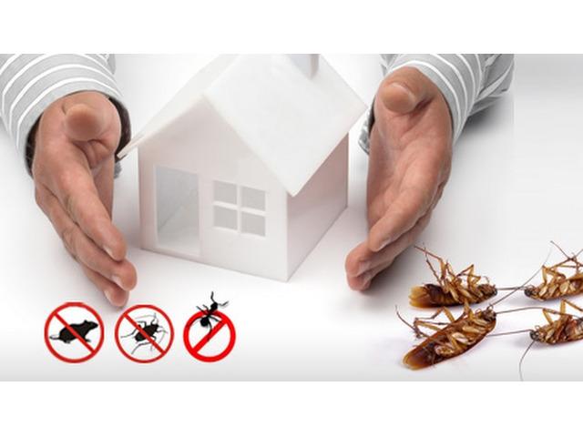 Pest Control Greenslopes - 1