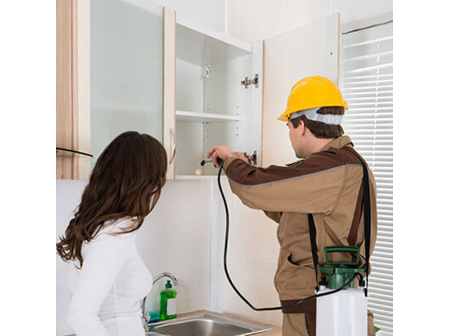Pest Control Doctor - Possum Removal services in Melbourne - 1