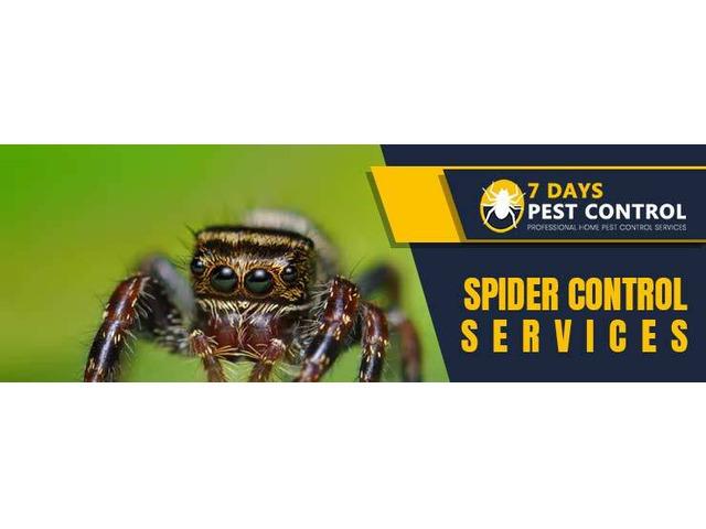 Spider Control Brisbane - 1