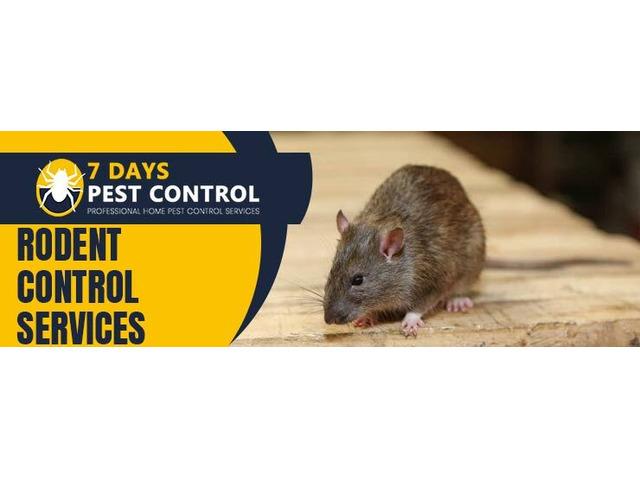 Rodent Control Brisbane - 1